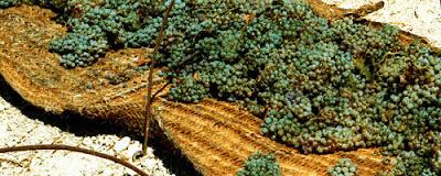 Soleo de uvas Pedro Ximénez