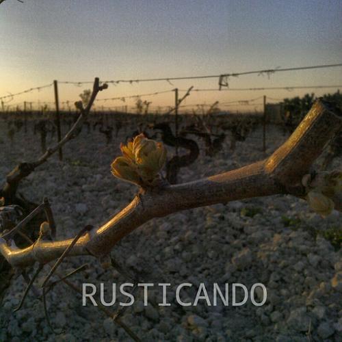 rusticando viñedo denominacion jerez final del invierno (2)