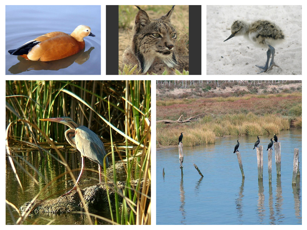 The Doñana Nature Reserve (English)