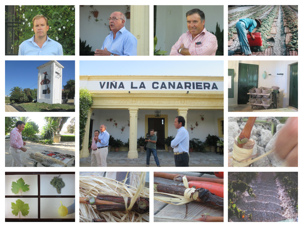 Collage La canariera