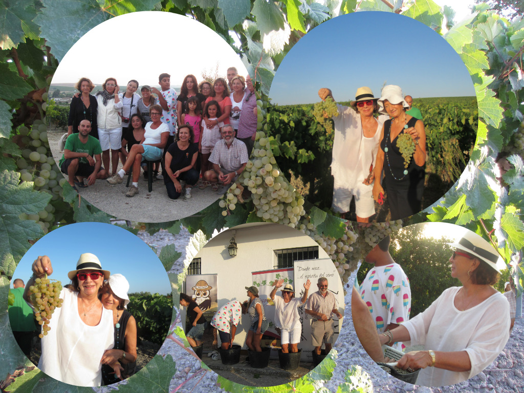Fotos de la Vendimia 2015 de D´Sherry Explorers.  D´Sherry Explorers Harvest 2015 photos