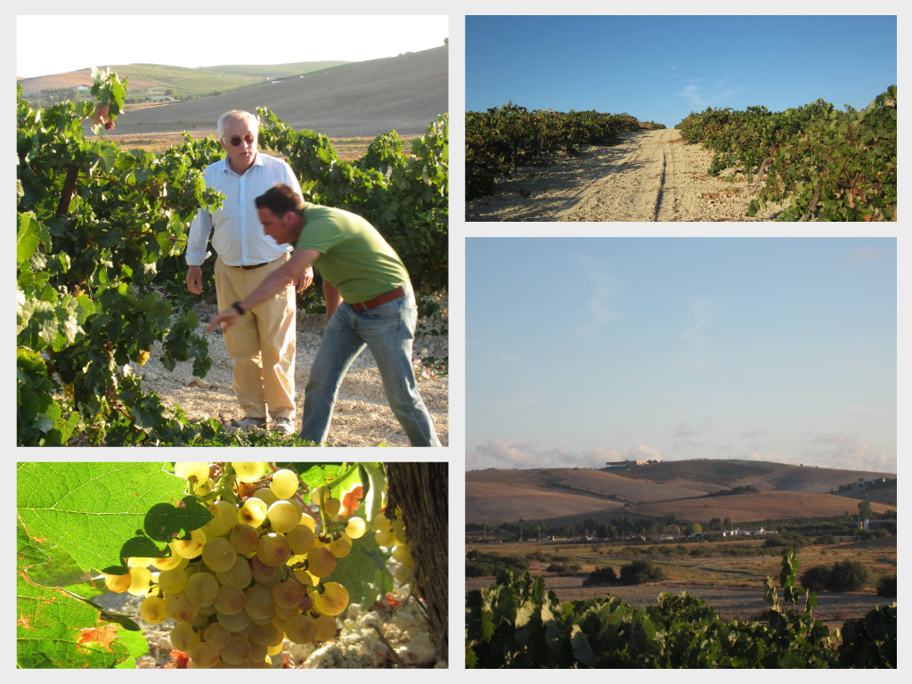 Collage vineyard 1