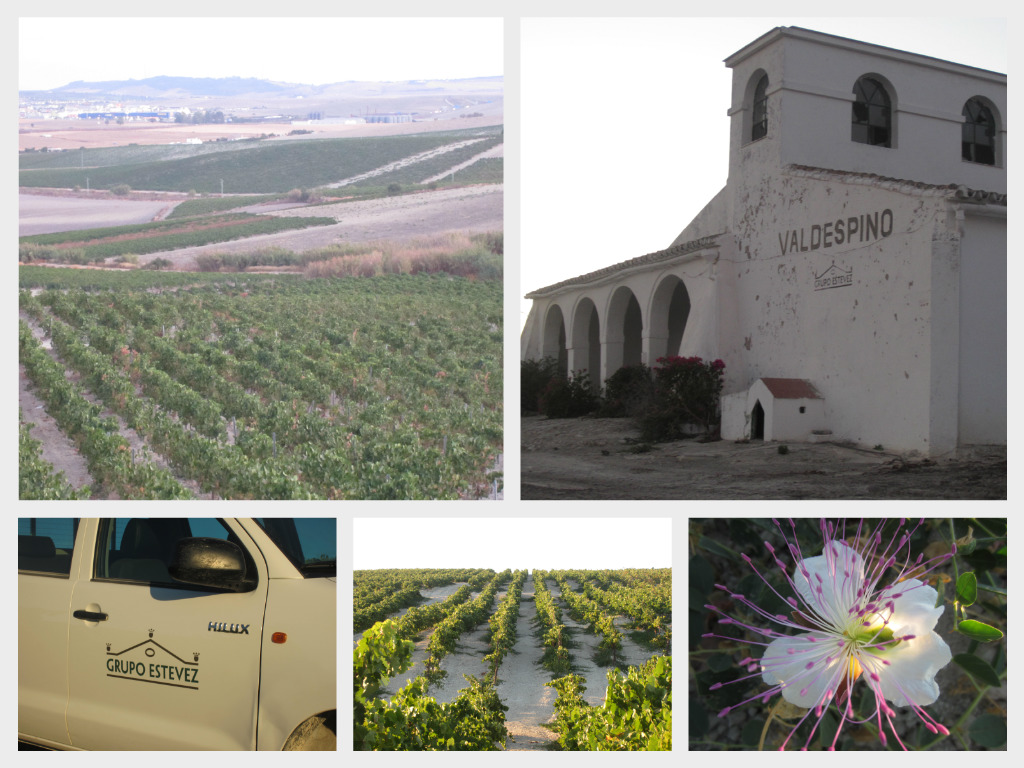 Collage vineyard 2