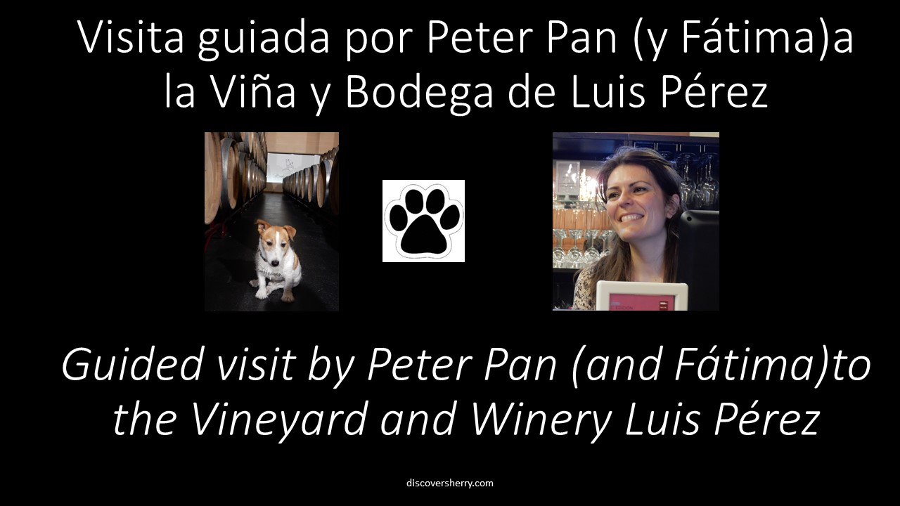 Visita guiada por Peter Pan de la viña y bodega Luis Pérez. / Guided visit by Peter Pan to the Vineyard  and Winery Luis Pérez