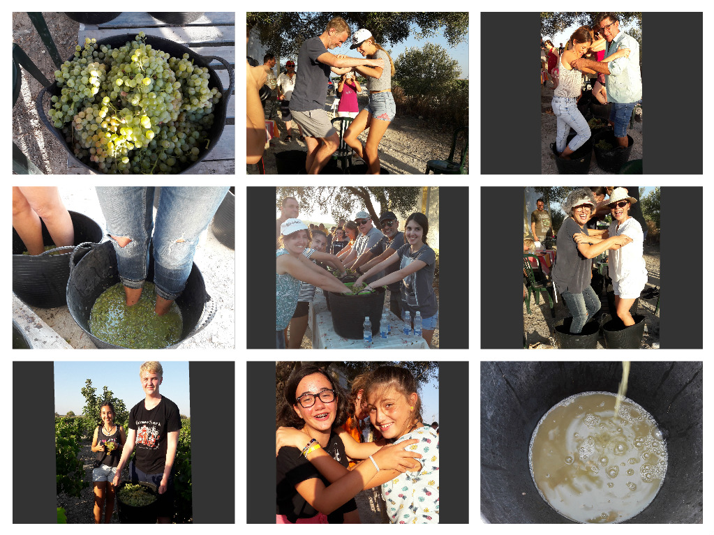 1er día de la VENDIMIA de los Sherry Explorers/ 1st Day of the Grape Harvest for the Sherry Explorers