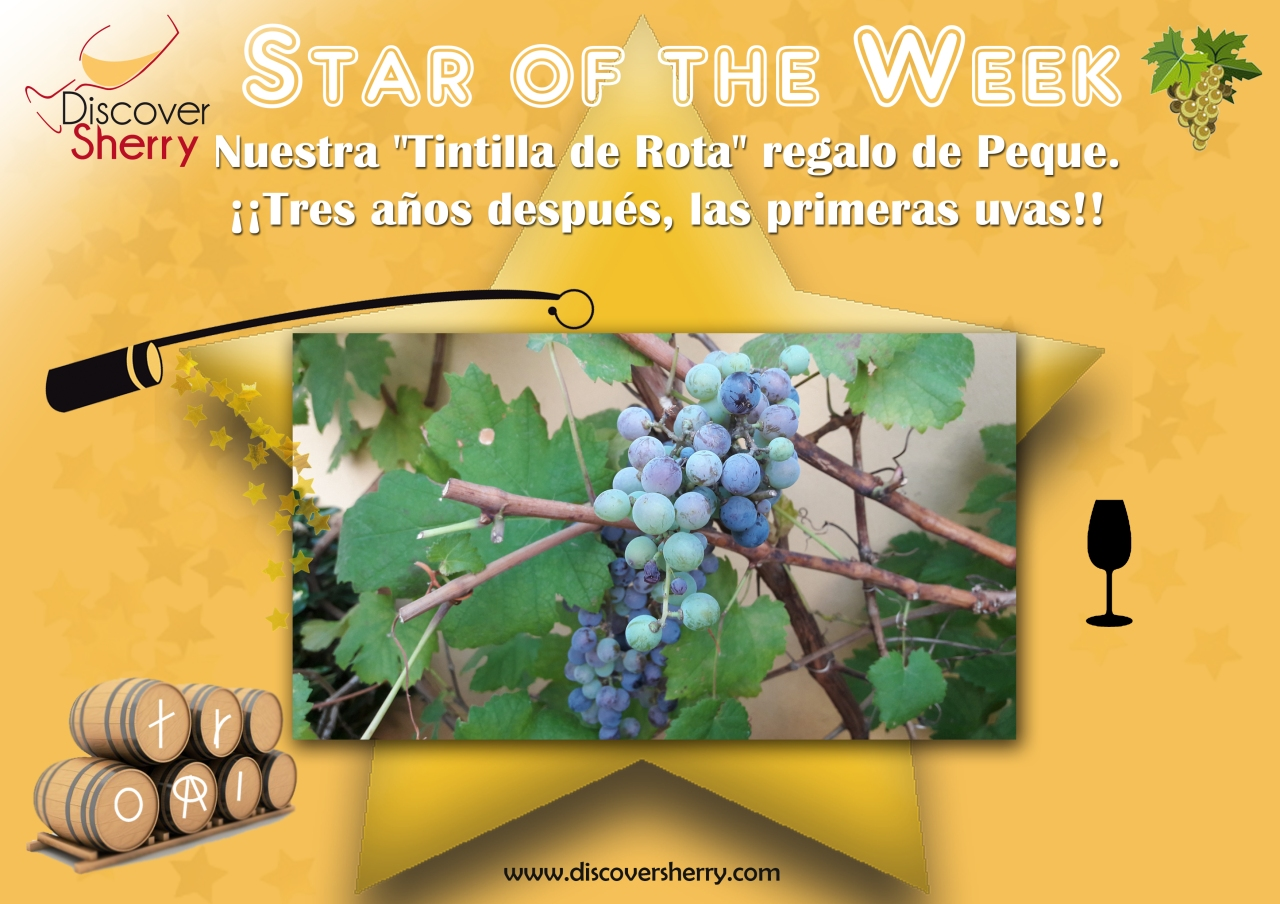 STAR of the WEEK: Nuestra Tintilla de Rota
