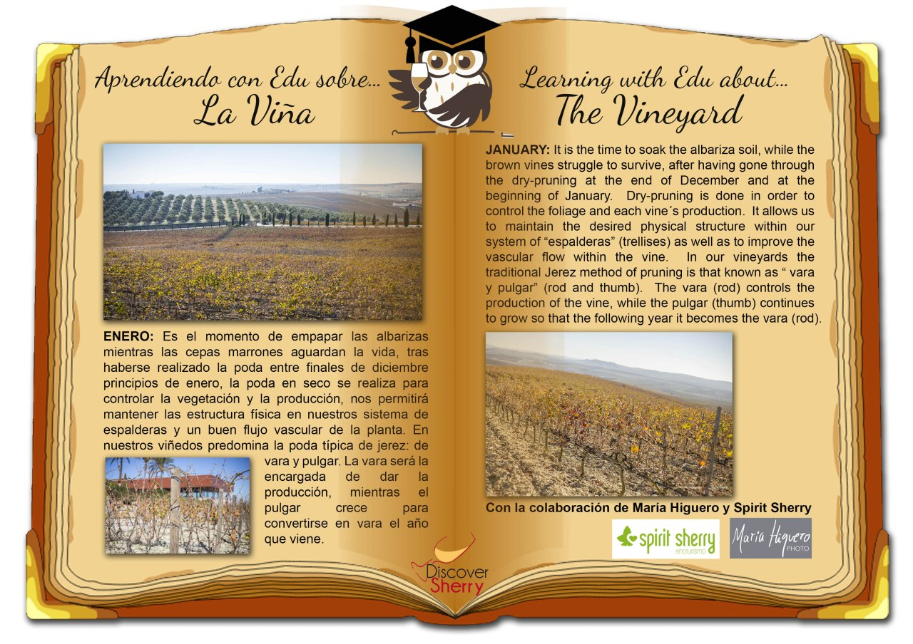 Aprendiendo con Edu sobre… la viña / Learning with Edu about… the Vineyard