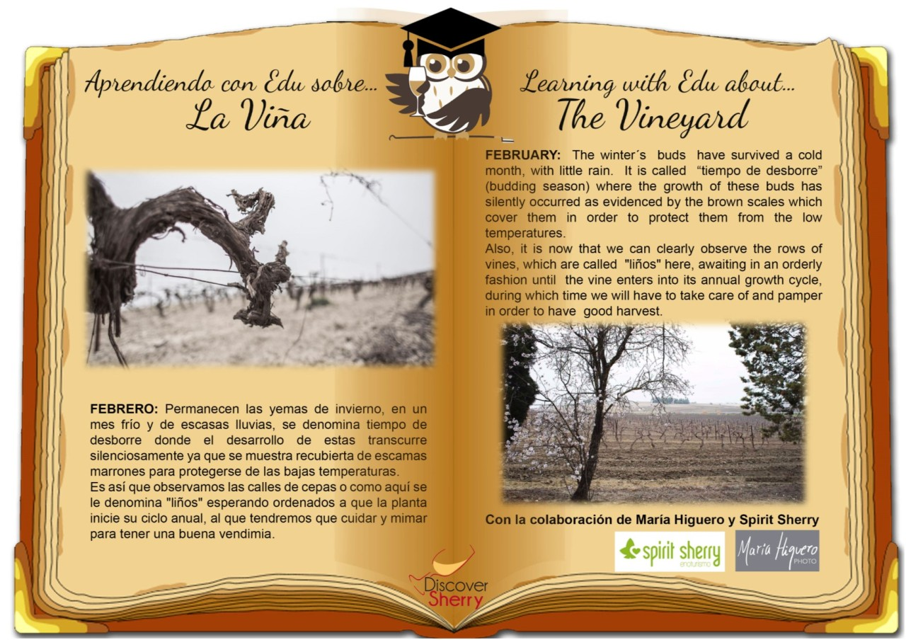 Aprendiendo con Edu sobre…la viña en febrero./ Learning with Edu about…the vineyard in February.