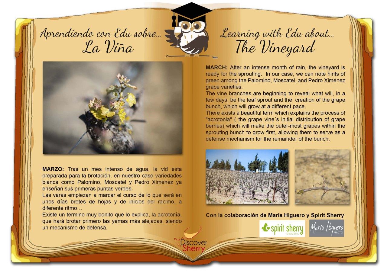 Learning with EDU about the Vineyard in March / Aprendiendo con EDU sobre laViña