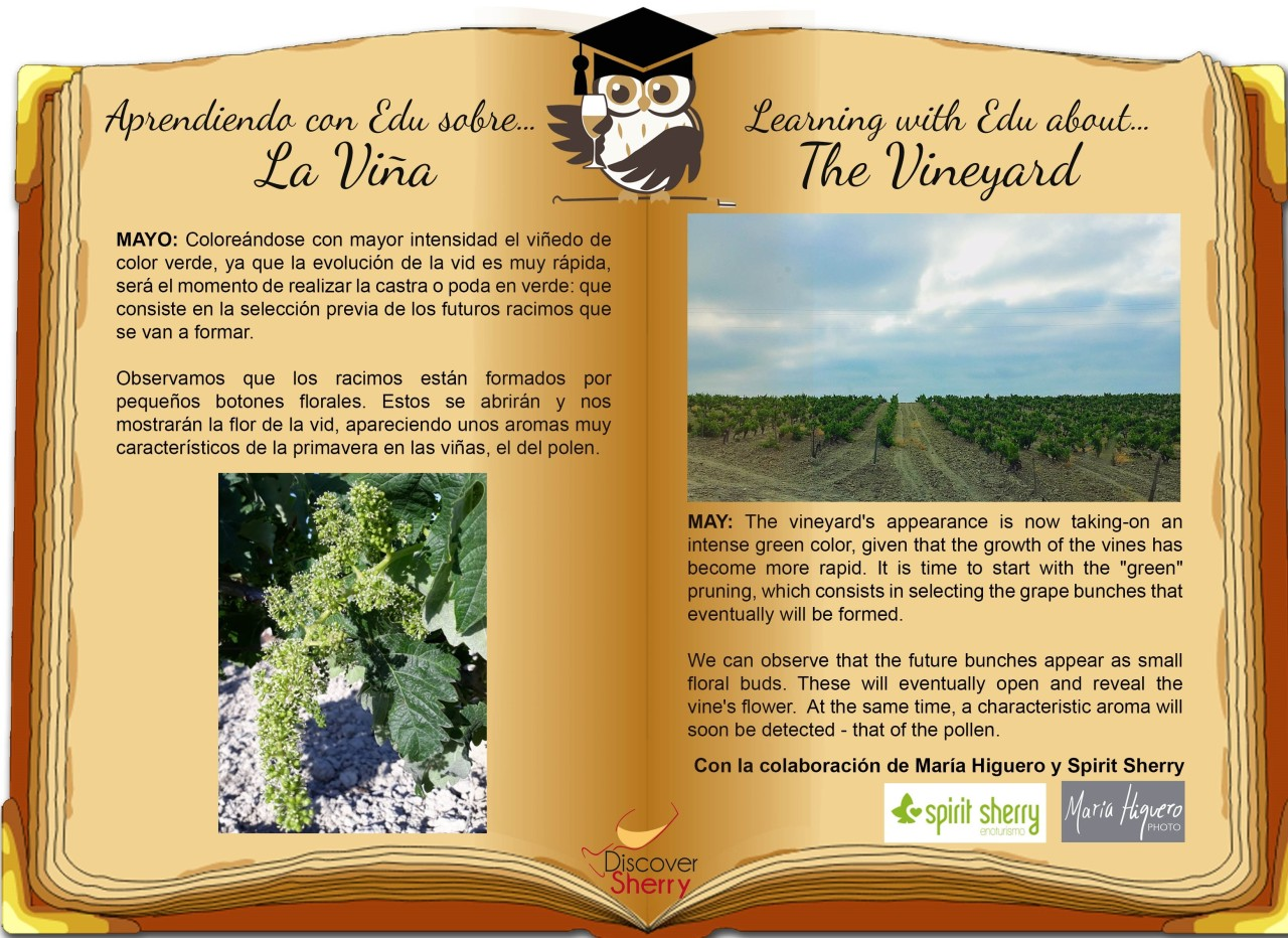 Learning with EDU about the vineyard: MAY / Aprendiendo con EDU sobre la viña: Mayo