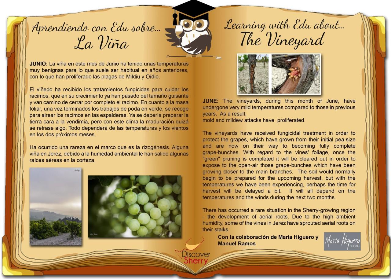 Aprendiendo con EDU sobre la viña: JUNIO / Learning with EDU about the vineyard:JUNE