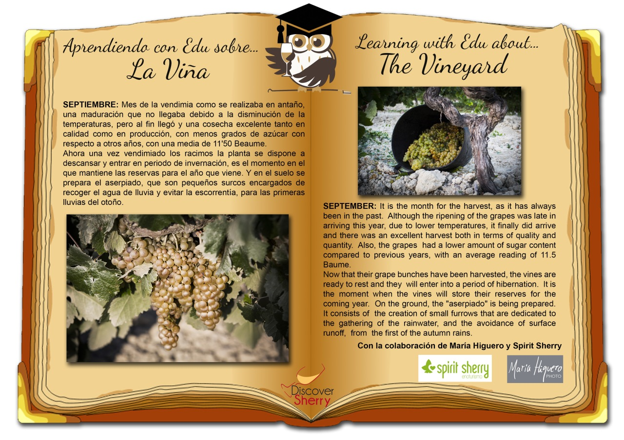 Aprendiendo con EDU sobre… la Viña: Septiembre / Learning with EDU about… the Vineyard: September