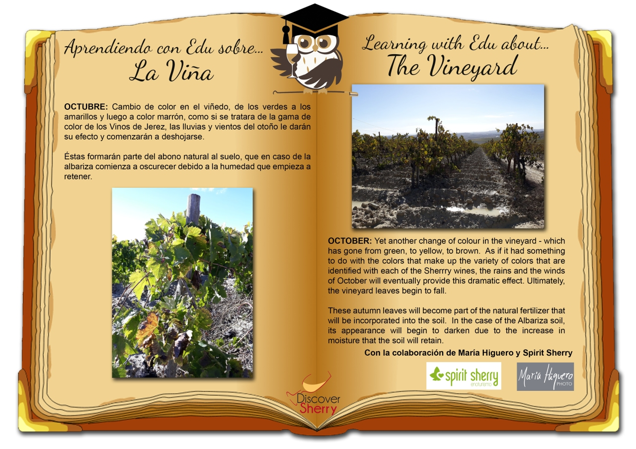 Aprendiendo con EDU sobre la viña: Octubre / Learning with EDU about the vineyard: October