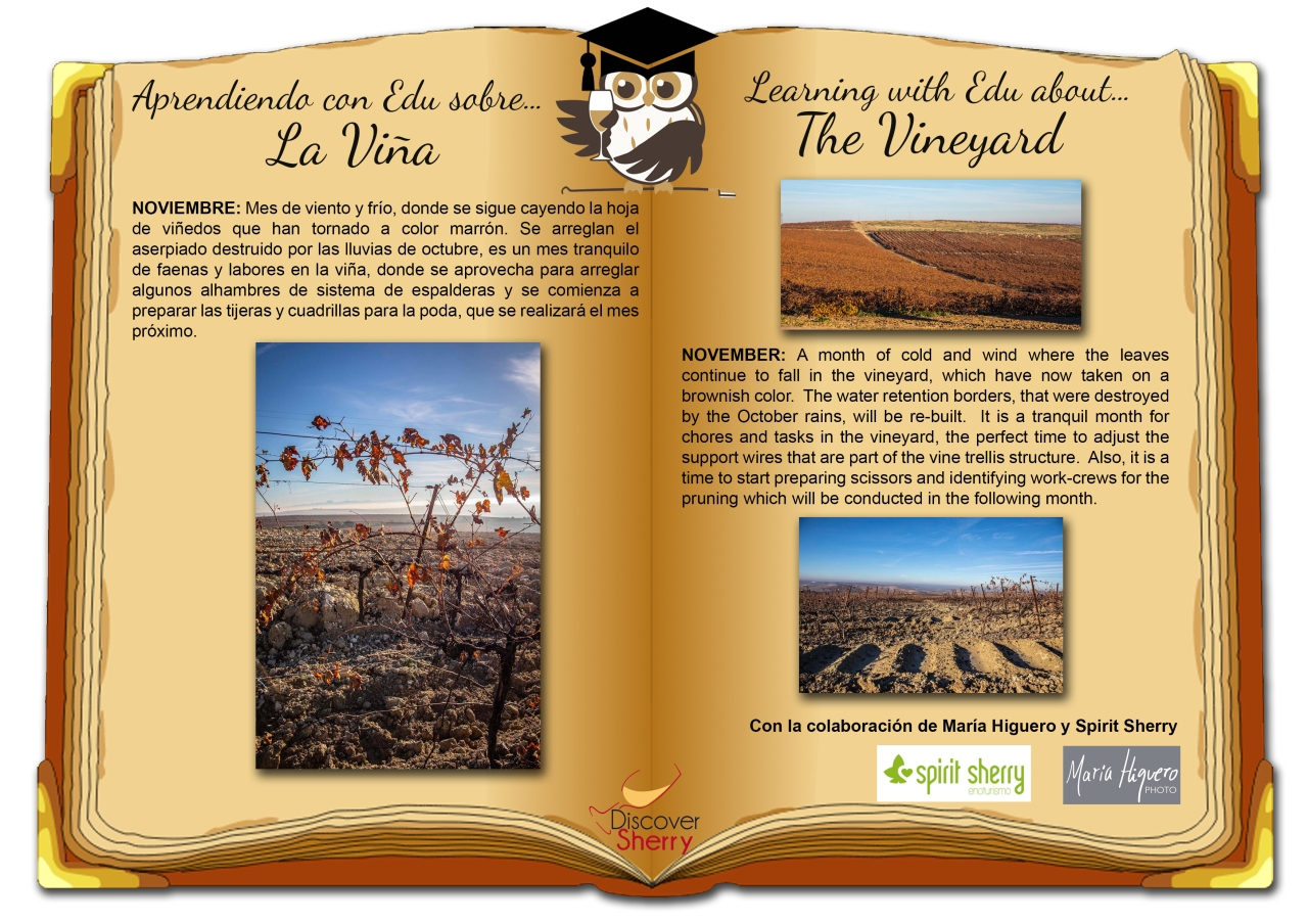 Aprendiendo con EDU sobre…La Viña: Noviembre / Learning with EDU about… The Vineyard: November