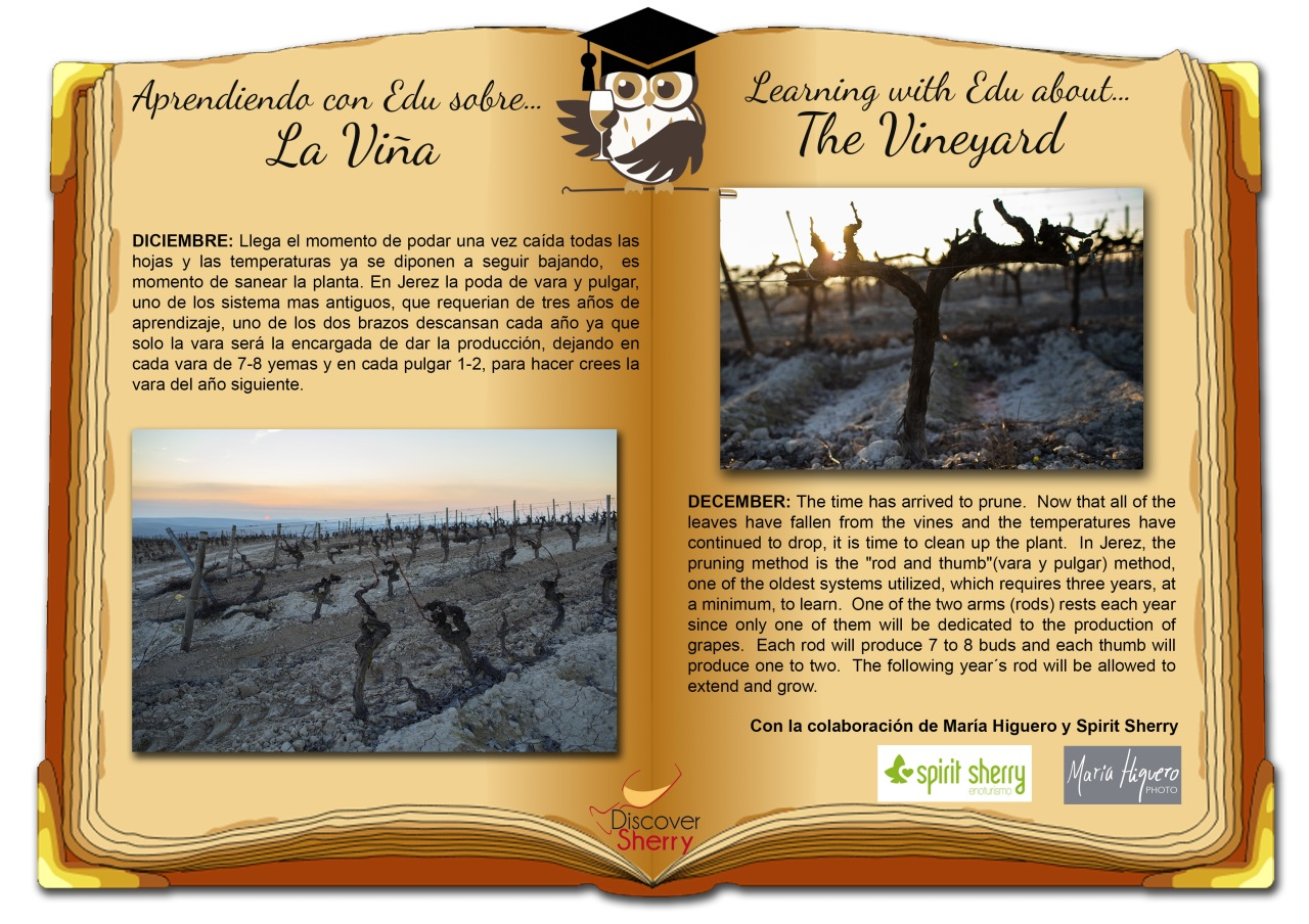 Aprendiendo con EDU sobre… la viña: Diciembre / Learning with EDU about… the Vineyard: December