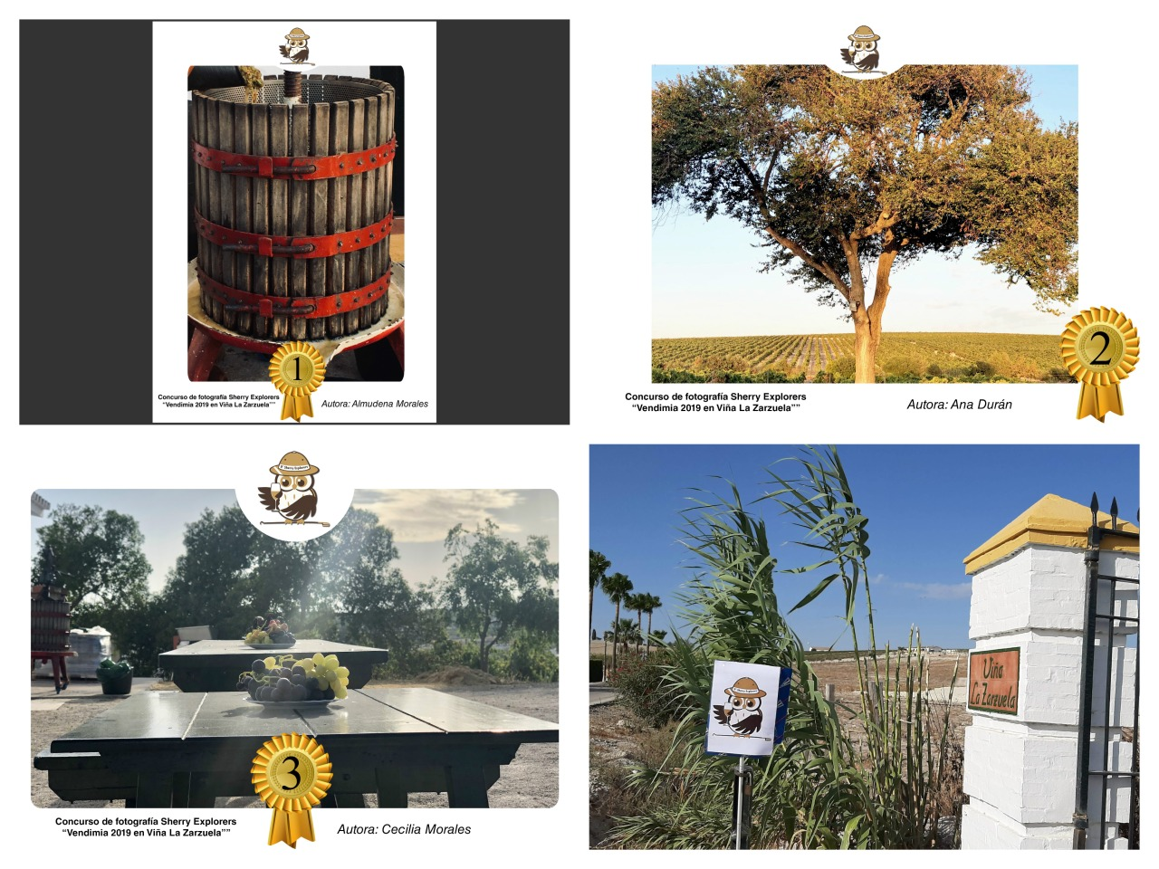Fotos ganadoras del Concurso de Fotografía de la Vendimia/