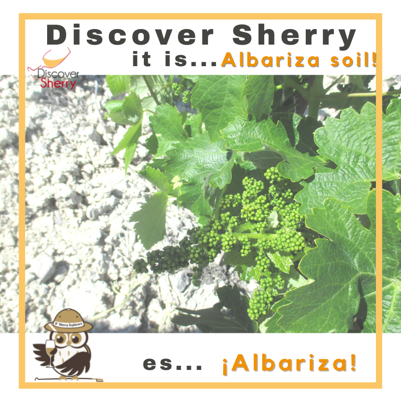 Discover Sherry, it is…