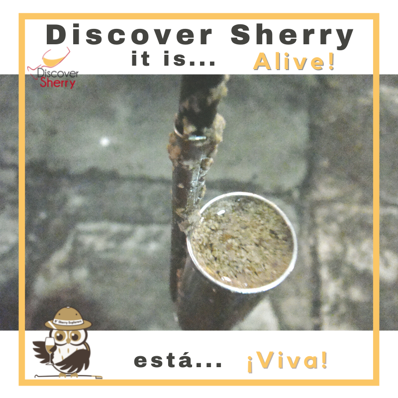 Discover Sherry, itis…