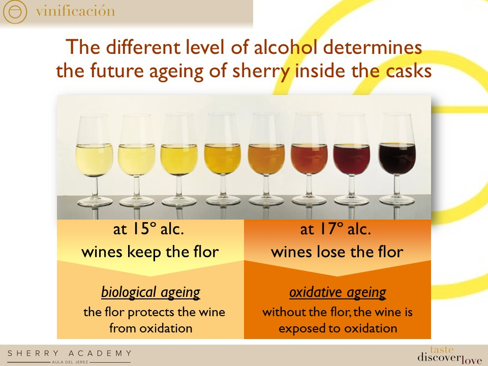 RESULTS FOR SHERRY EXPLORERS´TEST2